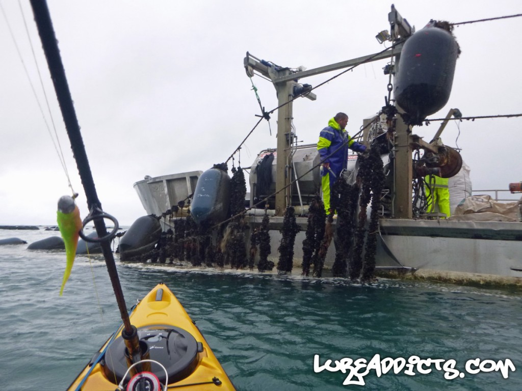 Ultimate-Kayak-Fishing-Trip-NZ-2-Lure-Addicts